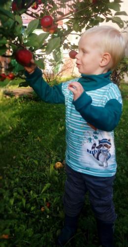 Klau-Fix - Zitronenschnütchen Sommersweat Charlie von fuchsfamilie Sarah Schneider